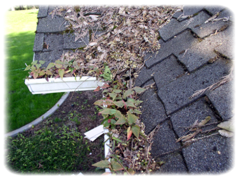 Illinois north shore home gutters downspouts clogged heavy